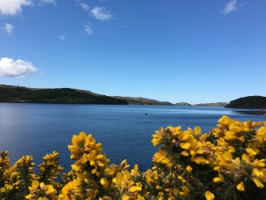 sea and gorse